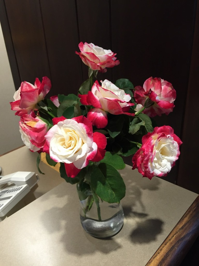 Eds wonderful smelling roses July 28 2016