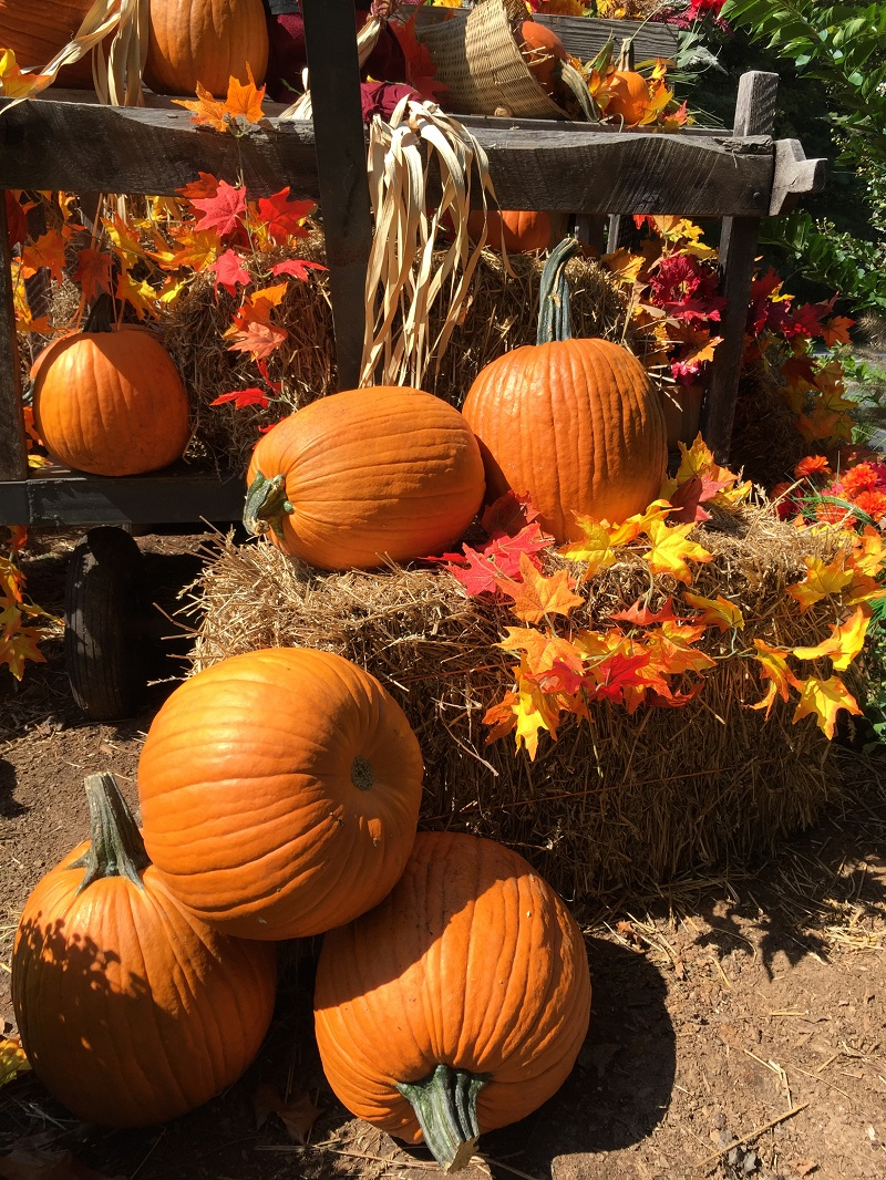 sm blog Fall decorations 2017 near gatehouse (1)